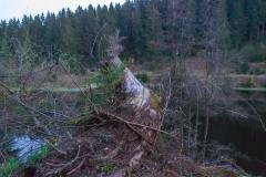 Harz - Okerstausee