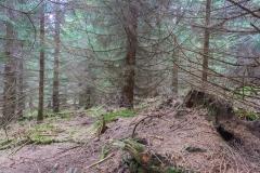 Harz - Schnee auf der Wolfswarte