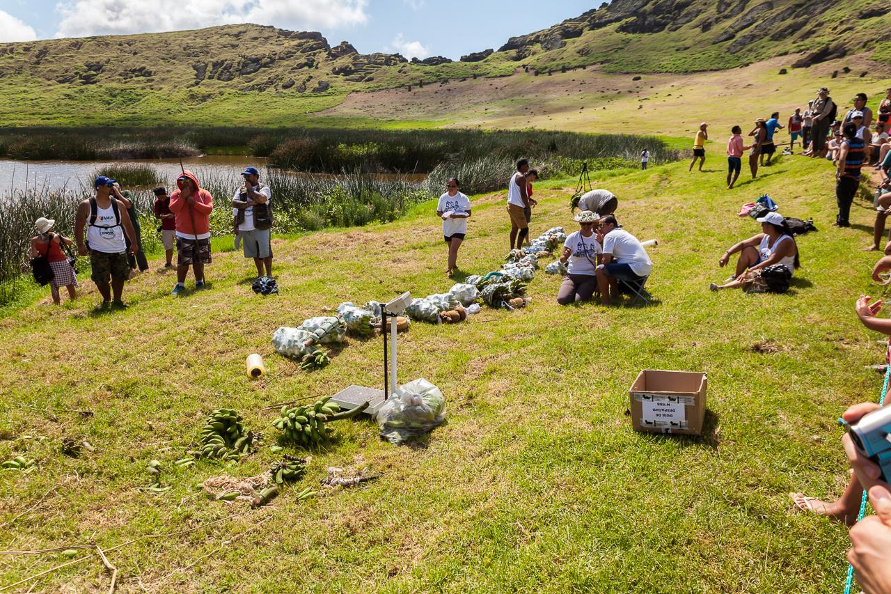 """Tapati Rapa Nui - """"Triathlon"""" am Rano Raraku - Bananenstauden zum Tragen"""