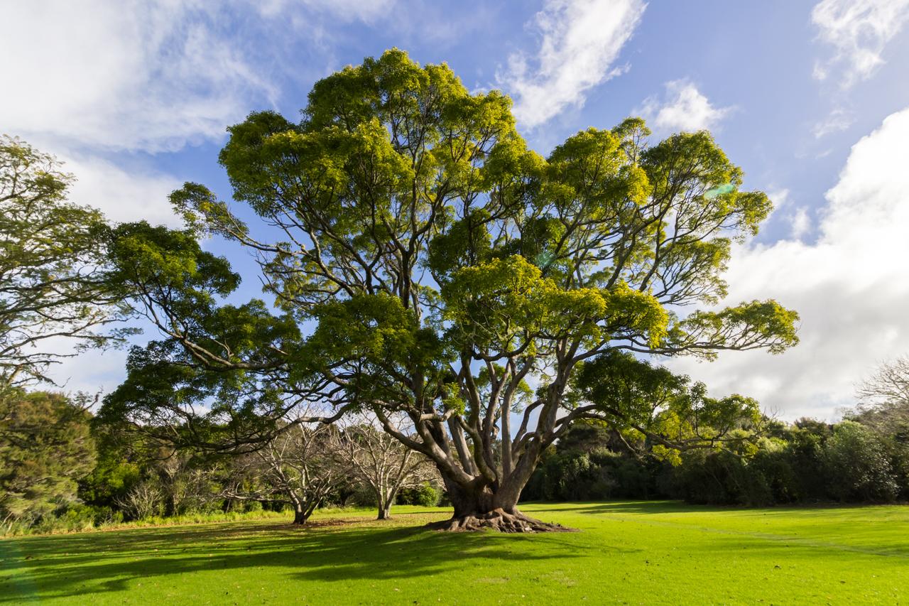 Neuseeland - Nordinsel - bei Kerikeri