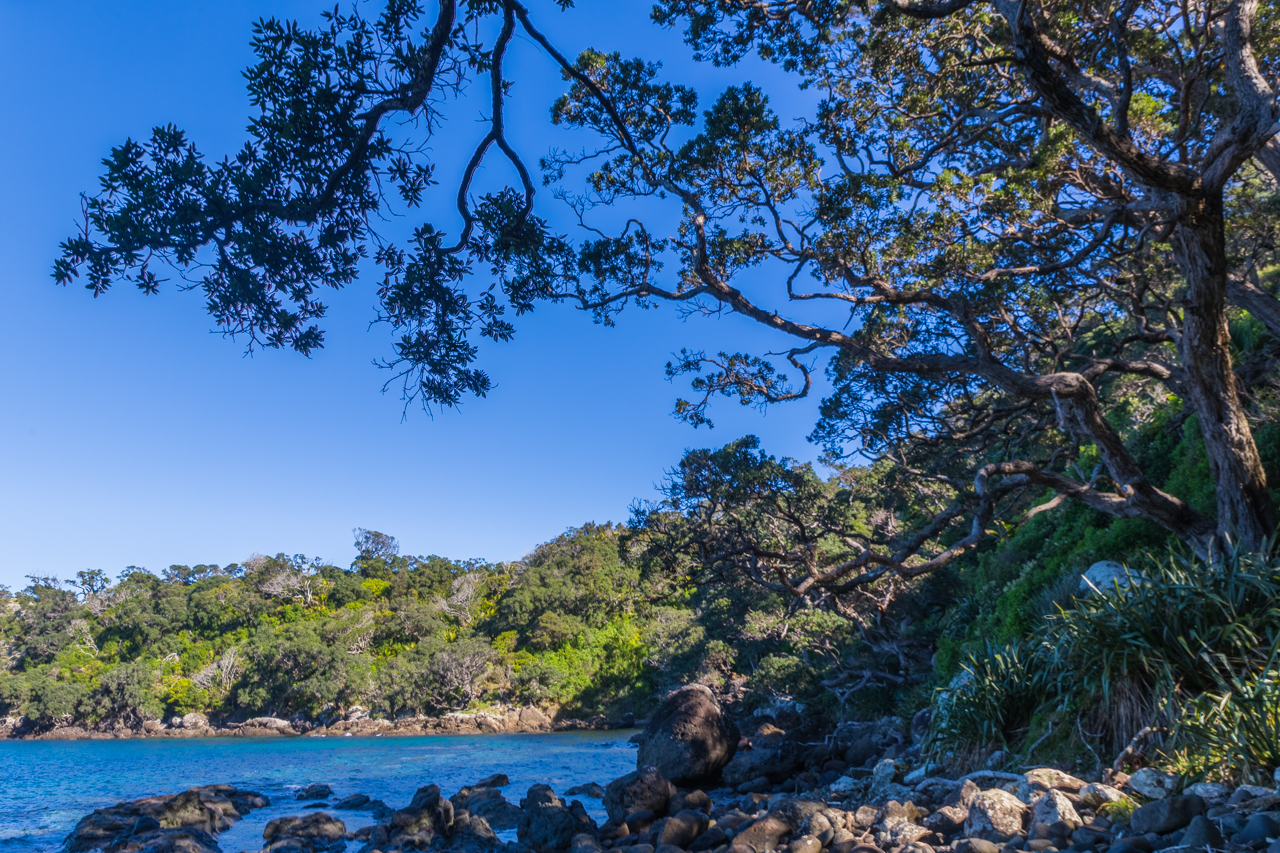 Neuseeland - Great Barrier Island - Dolphins Bay