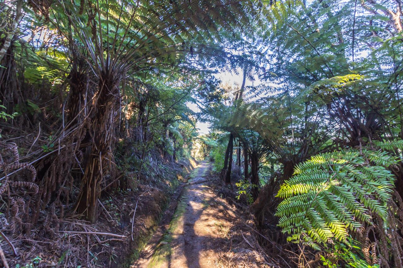 Neuseeland - Great Barrier Island - Warrens Track bei Port Fitzroy