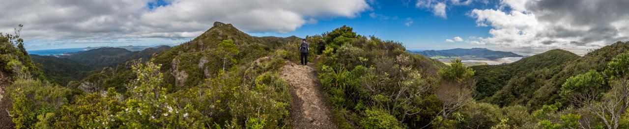 Neuseeland - Great Barrier Island - Palmers Track zu Mount Hobson