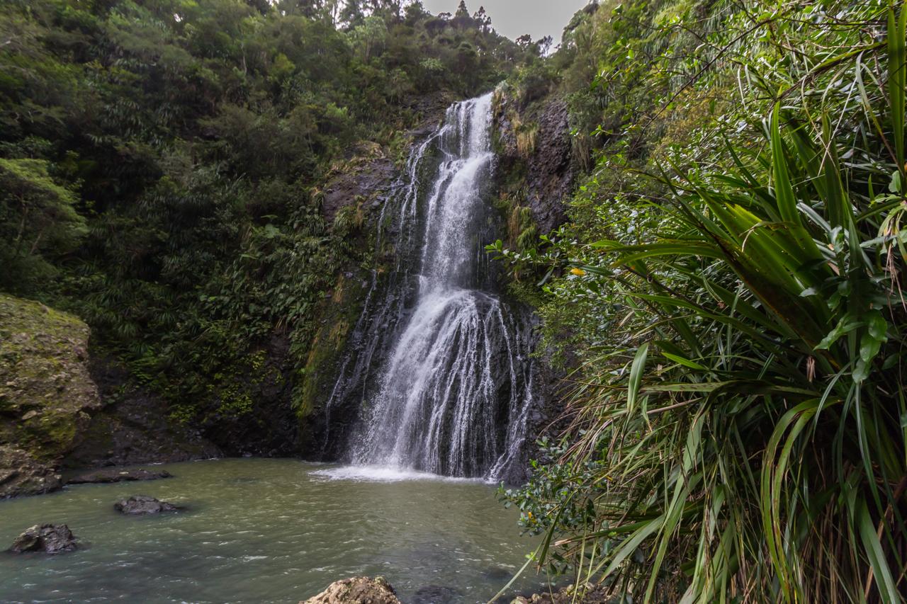 Neuseeland - Auckland Region - Waitakere Ranges - Kitekite Falls