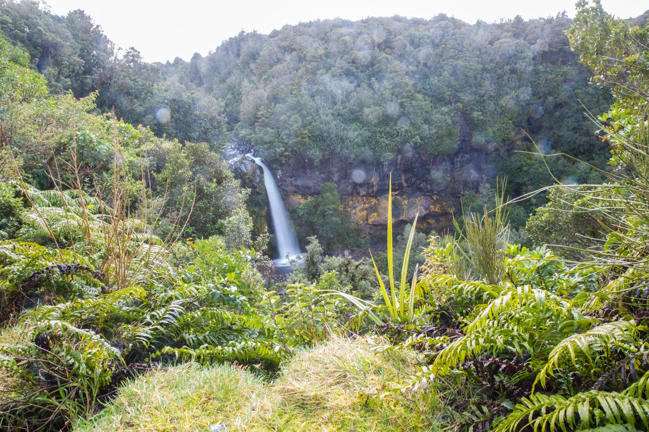 Neuseeland - Nordinsel - Dawsons Falls
