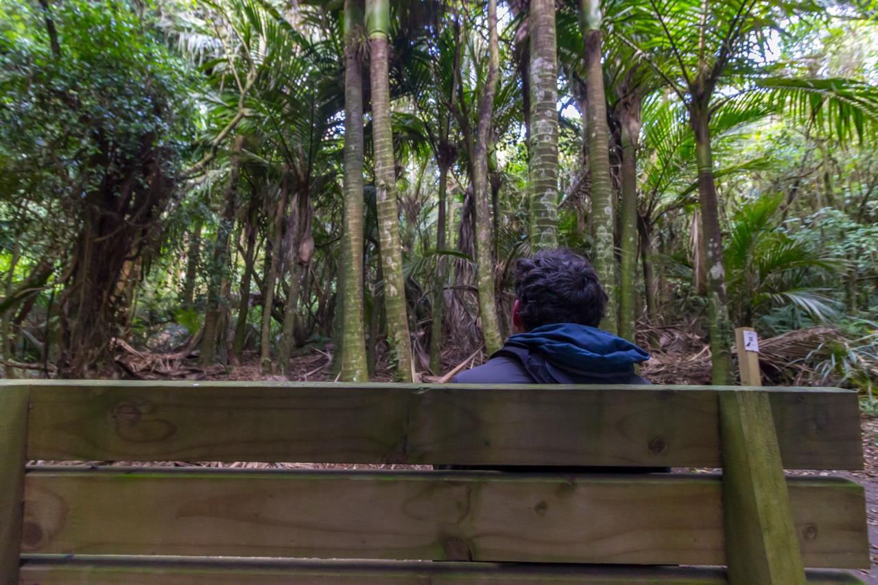 Neuseeland - Nordinsel - Tawa Loop Walk im Manawatu Gorge