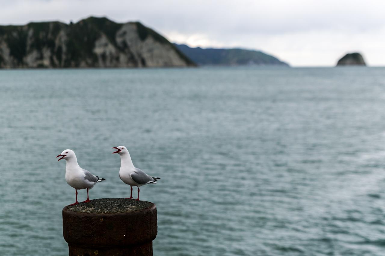 Neuseeland - Nordinsel - Ostküste - Tolaga Bay