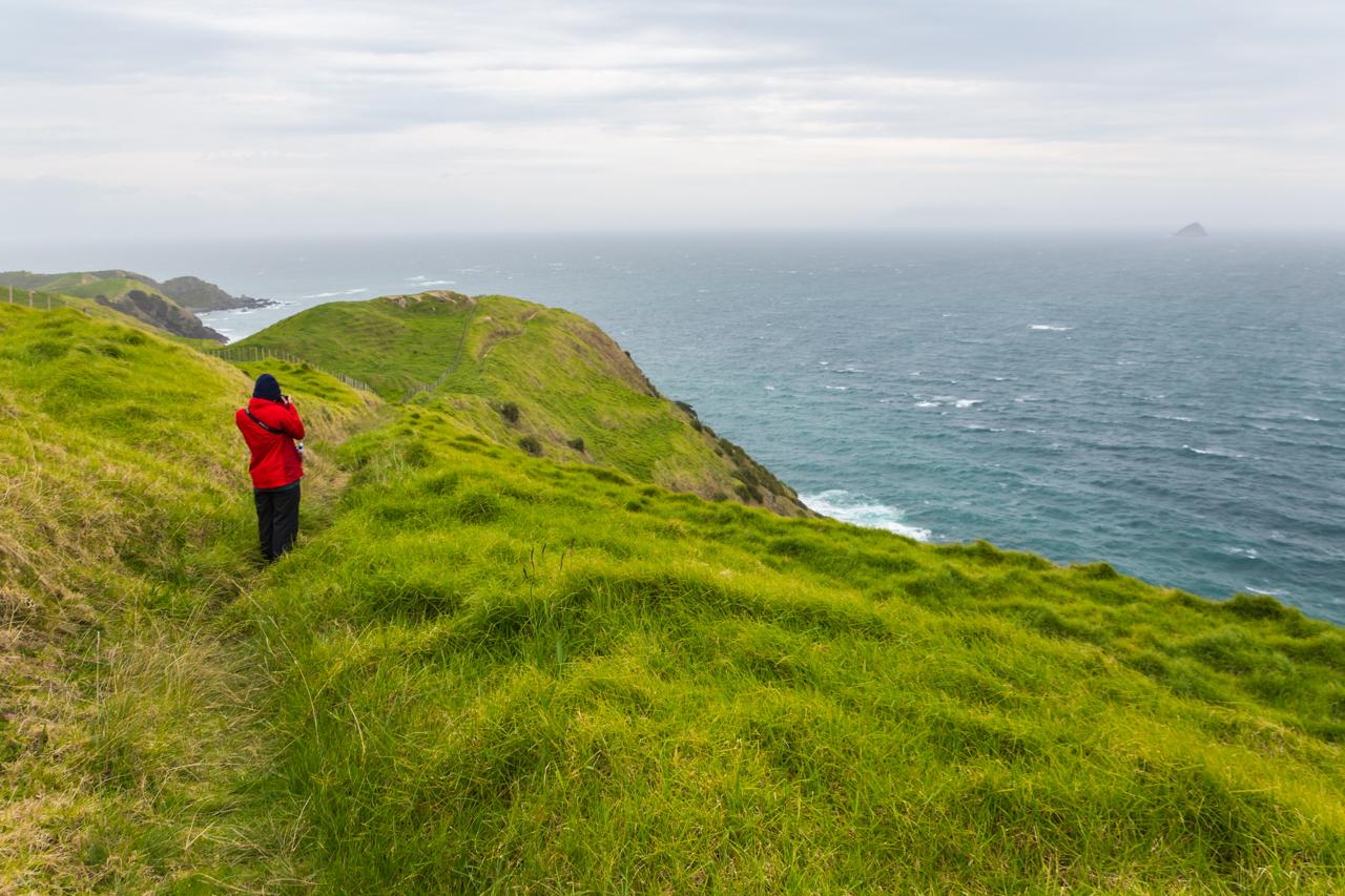 Neuseeland - Nordinsel - Coromandel - Muriwai Walkway