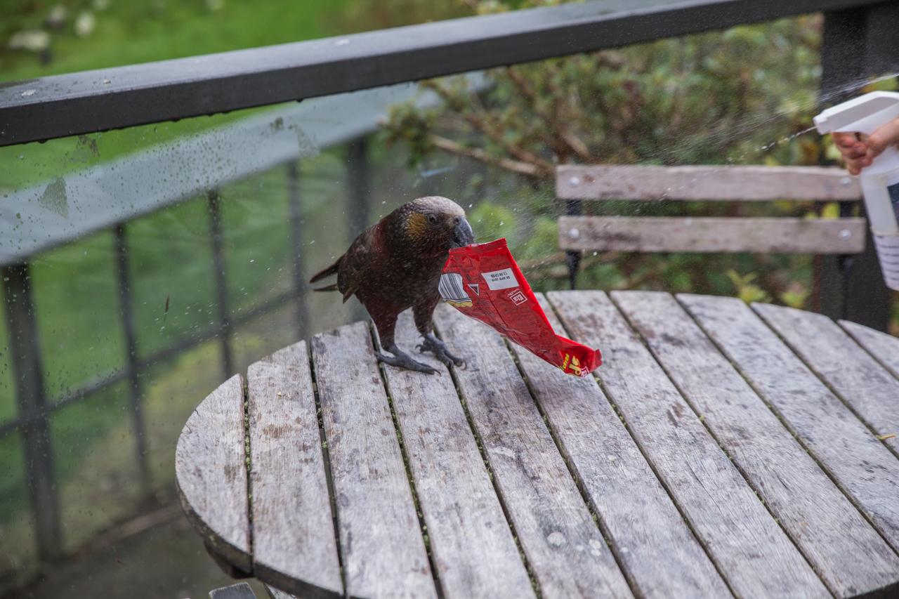 Neuseeland - Pukaha Mount Bruce National Wildlife Centre
