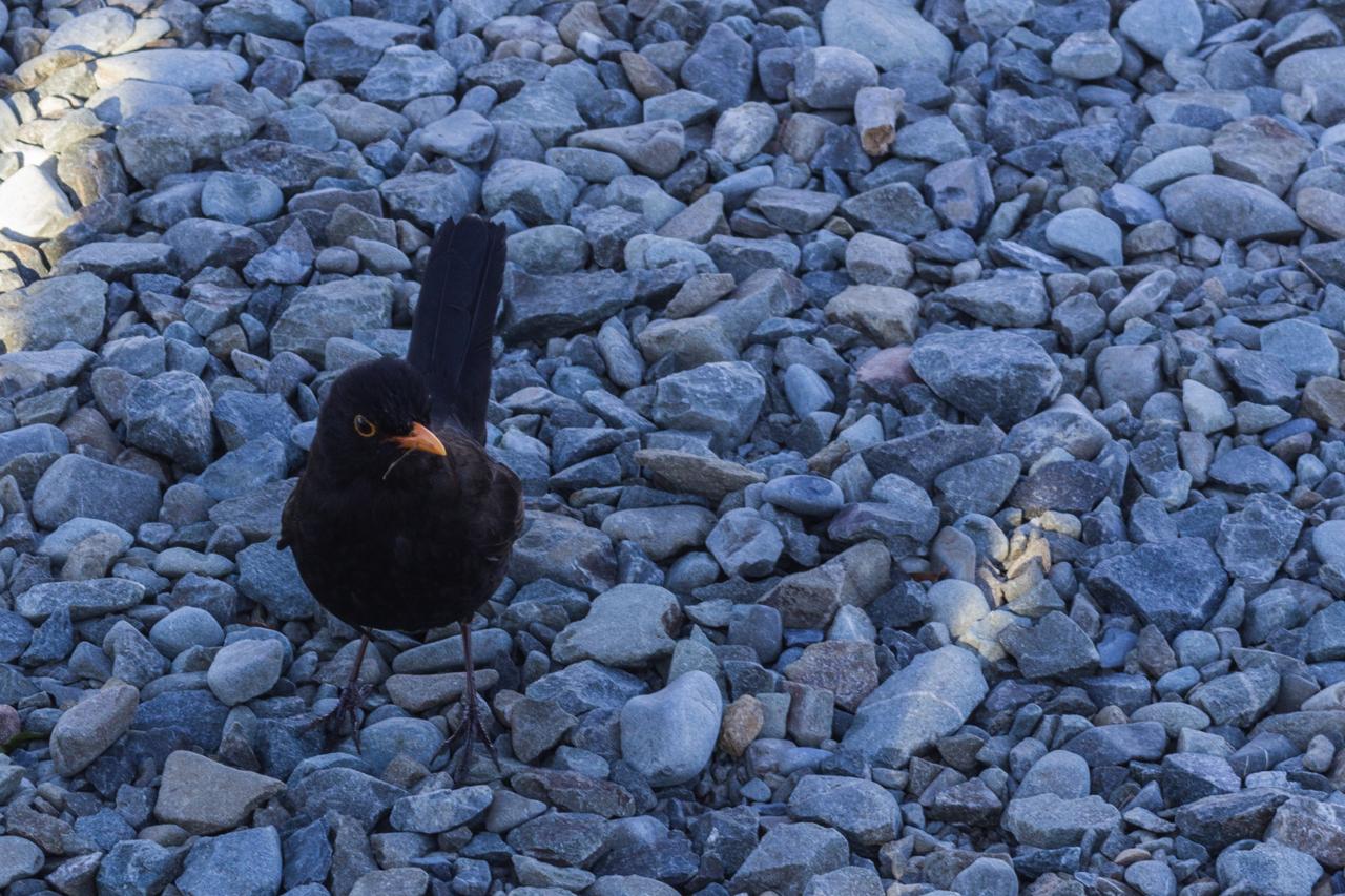 Neuseeland - Monro Beach Walk
