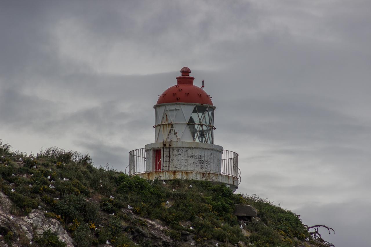 Neuseeland - Otago Peninsula