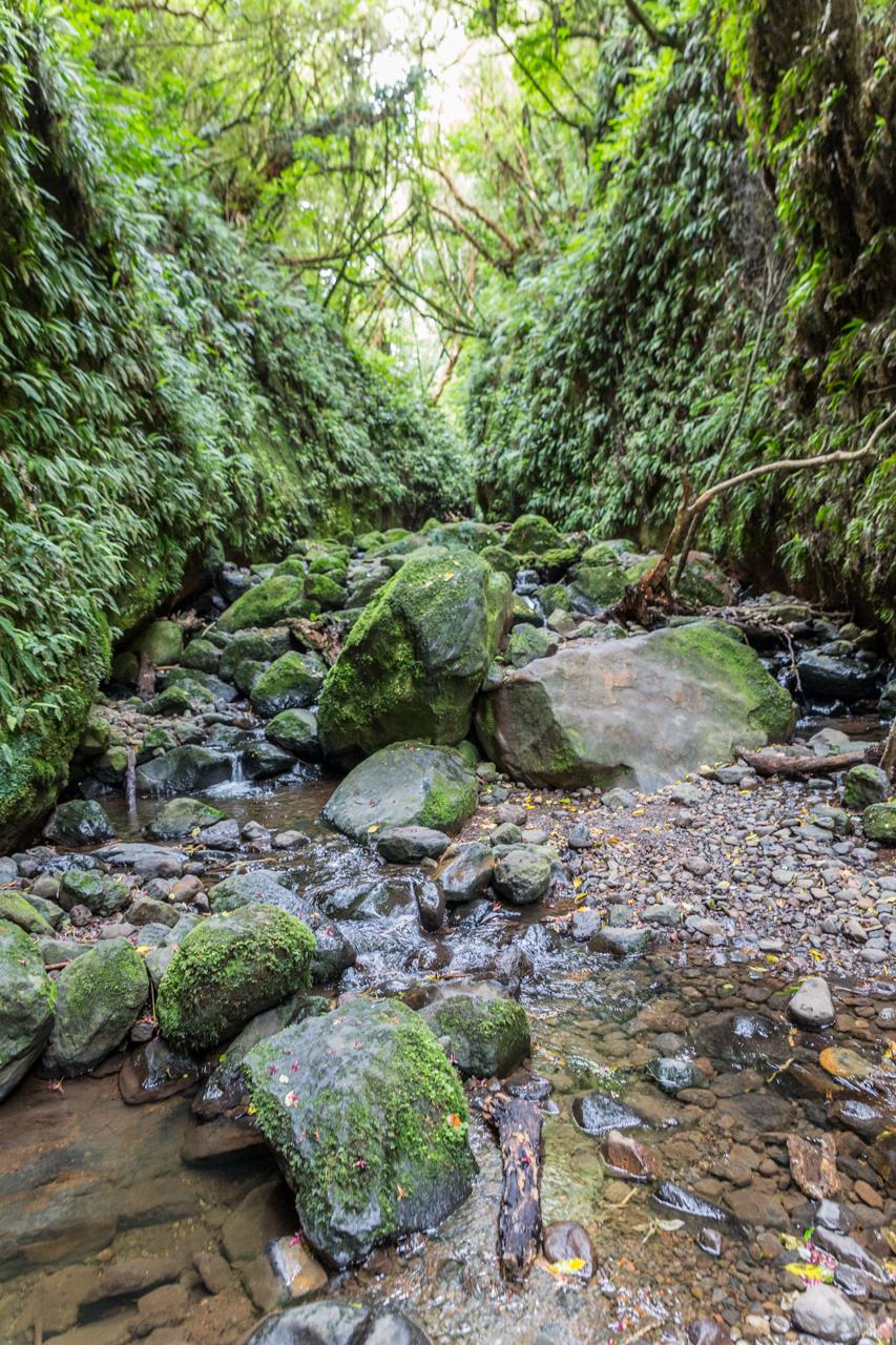 Neuseeland - Pukerangi Region