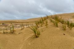 Neuseeland - Nordinsel - Northland - Te Paki Sand Dünen