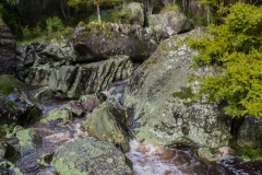 Neuseeland - Nordinsel - Westküste - Wairere Boulders