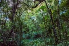Neuseeland - Nordinsel  - Waipua Forest