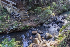 Neuseeland - Great Barrier Island - Wanderweg nach Medlands
