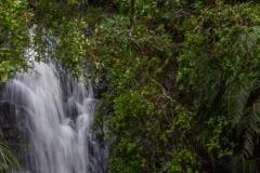 Neuseeland - Auckland Region - Waitakere Ranges - Fairy Falls