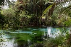 Neuseeland - Nordinsel - Hamurana Springs