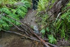 Neuseeland - Nordinsel - Kaweka Lake Track, so mit Brücken