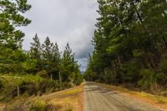 Neuseeland - Nordinsel - die Schotterstraßen durch die riesigen Forstgebiete sind manchmal besser als die Highways