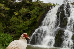 Neuseeland - Nordinsel - Coromandel - Owharoa Falls