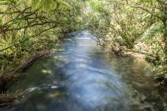 Neuseeland - Golden Bay - te waikoropupu springs