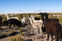 Salar de Uyuni - Bolivien