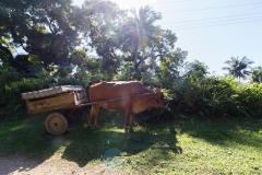 von Baracoa nach Gibara - Cuba