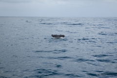 Kaikoura - whale watch - Neuseeland