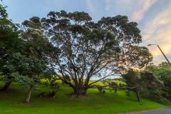 Auckland - Winstone Park