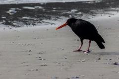 Neuseeland - Nordinsel - Ostküste - Marsden Point