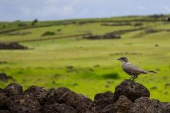 Richtig viele Tiere gab es auf der Insel nicht zu sehen