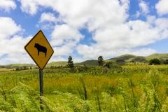 Osterinsel - entlang der Westküste - Warnschilder für 50 Kühe die wir in 5 Stunden gesehen haben