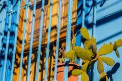 Der Kaktus steht vermutlich schon lange dort. Durch die Gitterstangen durchgewachsen.