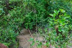 Guayaquil - Isla Santay - viel Natur