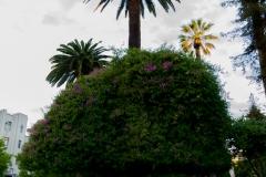 Noch ein paar Eindrücke aus dem Park in Talca.