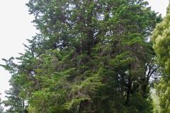 Hier gibts auch noch viele große, alte, dicke, Bäume.