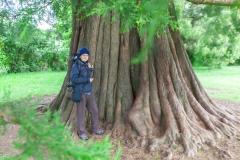 Der Baum ist ..