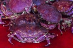 Frische Krabben?
