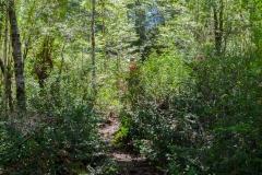 Der Wald ist einfach...