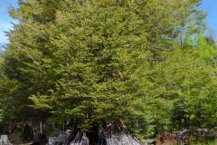 Der kleine Baum wächst im Rest vom Großen.