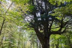 Große und herrliche Bäume gibts auch hier.