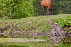 Ein doppeltes Pferd.