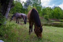 Besuch von den Pferden haben wir auch bekommen.