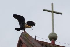 Puerto Varas - vermutlich der Vogel auf dem Dach ;-)