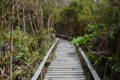 Nationalpark Chiloé - durch das Moor sind die Wege teilweise aus Holz