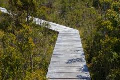 Nationalpark Chiloé - und immer wieder solche Stellen