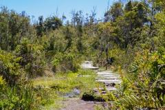 Nationalpark Chiloé - und was teilweise davon über geblieben ist