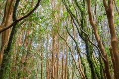 Nationalpark Chiloé - und wieder im Wald