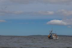 Chiloé - Quellón - einsame Schiffe im Hafen